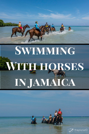 A Book Pertainig To Swimming With Horses