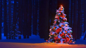 christmas tree lights bokeh forest trees snow winter color 1920x1080