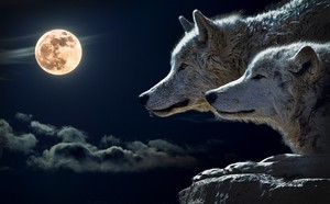 Wolves with a Full Moon
