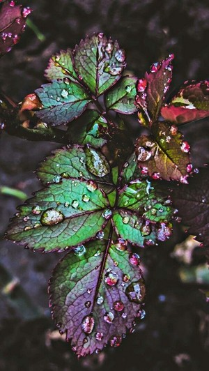 Colourful Rainy Leaves