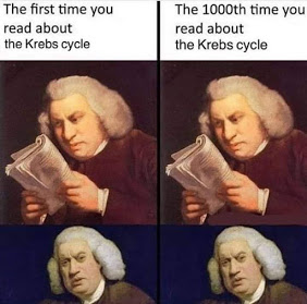 Learning the Krebs Cycle