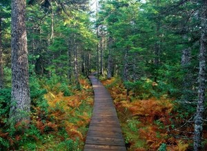 Fundy National Park, New Brunswick