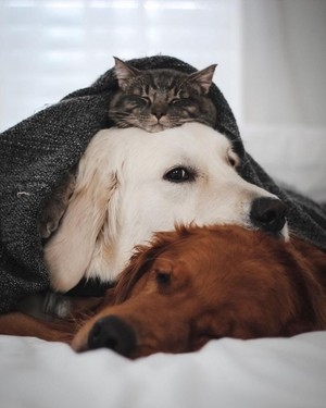 so cute Dog/cat friendships🐶💖🐈