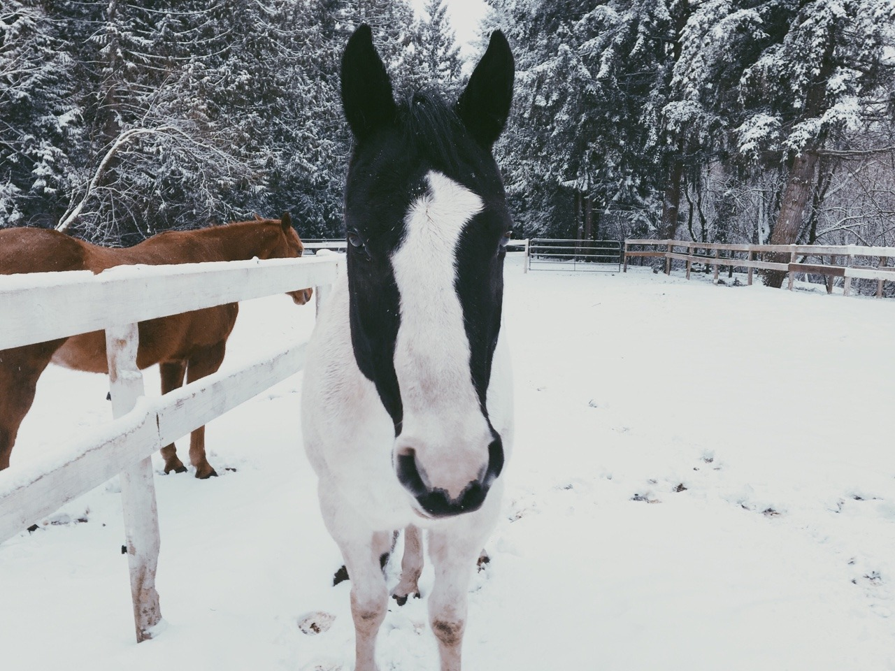 🐎 Winter on the Farm ❄️