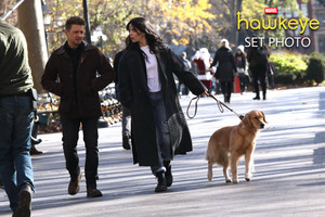 Hawkeye || Hailee Steinfeld, Jeremy Renner, and Lucky the pizza Dog || BTS