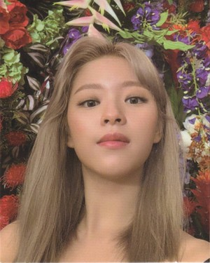 Jeongyeon - Photocards