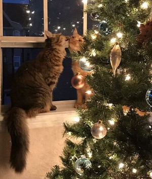 Cats 😸🎄