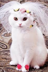 Bridal Kitty