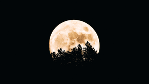 moon wallpapers☽