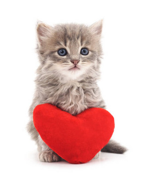 Happy Valentines Day...I meow toi