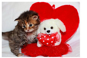 Happy Valentines Day...I meow bạn